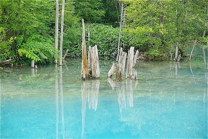 青い池 2016年8月