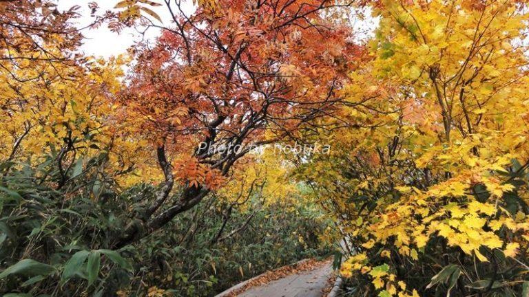 神仙沼の散策路の秋の風景(phpto by nobuka)