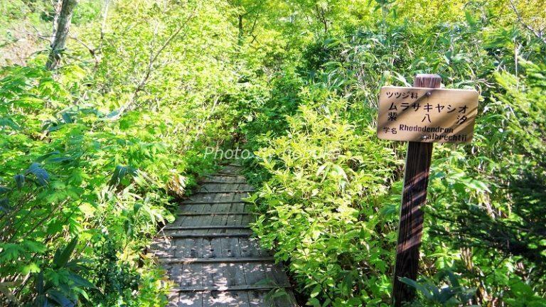 神仙沼の散策路の階段の様子(phpto by nobuka)