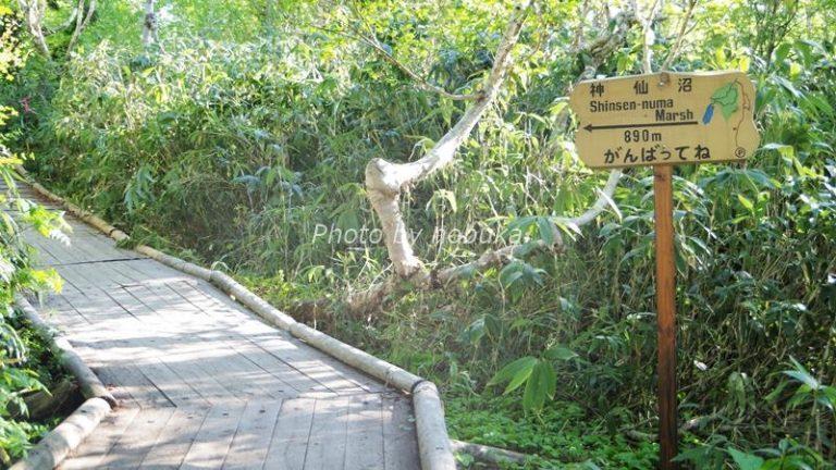 神仙沼の散策路はところどころ、あと何mという看板もあってちょっと励みになります(phpto by nobuka)