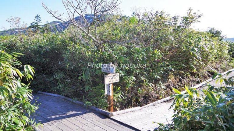 神仙沼の散策路は途中で道が二股に分かれます(phpto by nobuka)