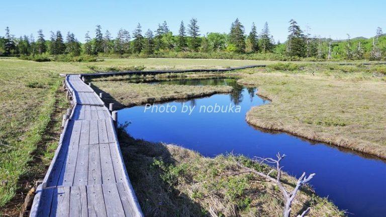 神仙沼の散策路周辺の湿原(phpto by nobuka)